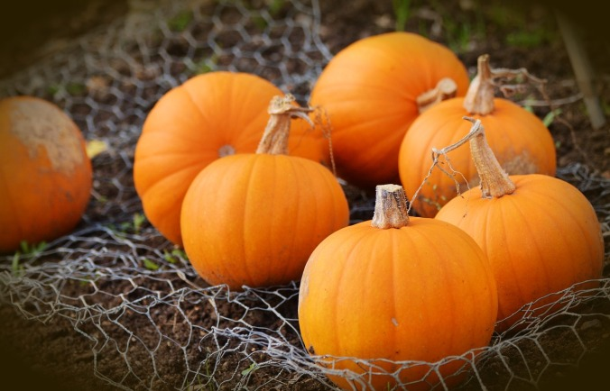 pumpkin-1679827_1280